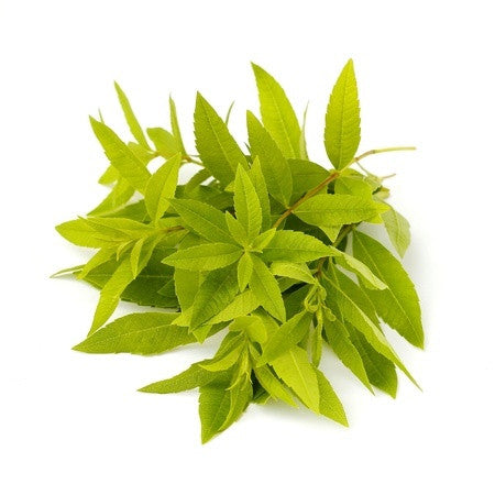Lemon Verbena Leaf Oil (Lippia Citriodora)