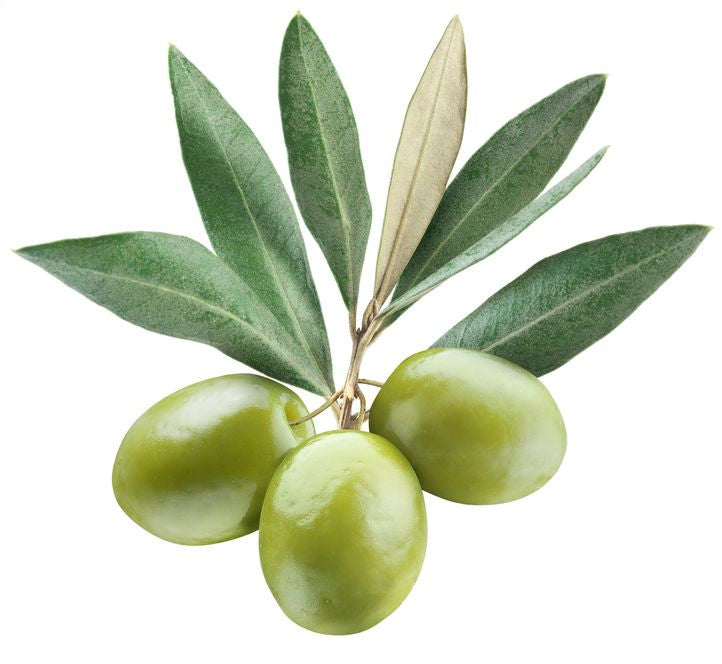 Organic Olive Fruit Oil and Olive Leaf Extract (Olea Europaea)