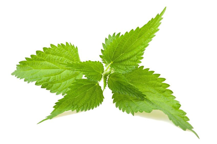 Nettle Leaf Extract (Urtica Dioica)
