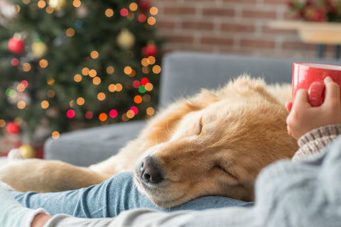 Relaxing Holiday Season with Dog