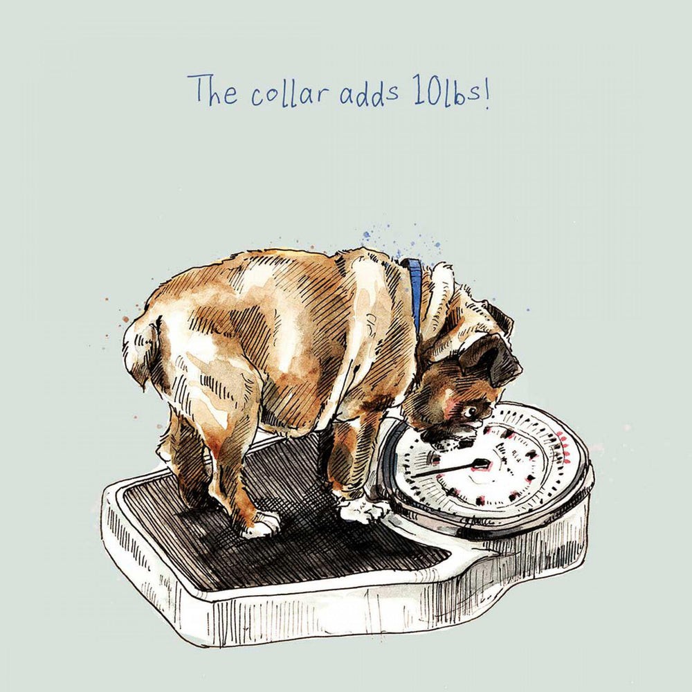 Dog Birthday Card - The collar adds 10lbs! - Art Beat