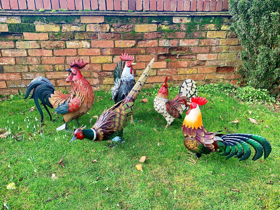 Garden Birds - Colourful Cockerel - Woodland Friends