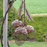 Triple Acorn Bird Feeder - Aged Bronze Metal Finish
