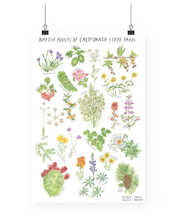 NATIVE PLANTS OF CALIFORNIA