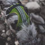 DOGGIE HARNESS