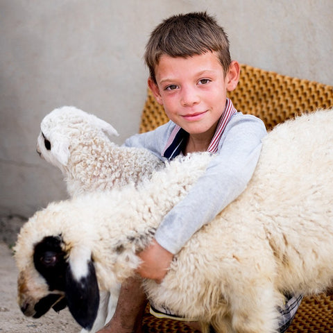 Two Sheep for a Displaced Family
