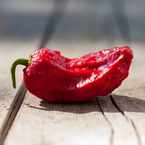 Bhut Jolokia aka Ghost Pepper seeds