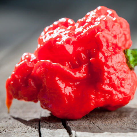 Carolina Reaper Variant BX seeds