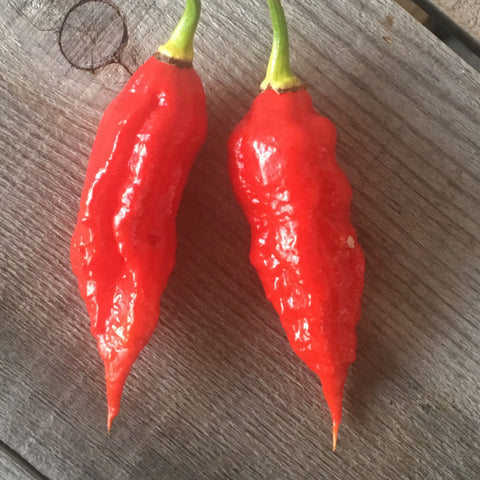 "Scorpion X Bhut Jolokia DX ""SL"" Seeds"