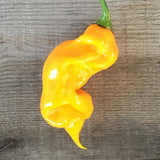Trinidad Viper X Purple Bhut YELLOW Long