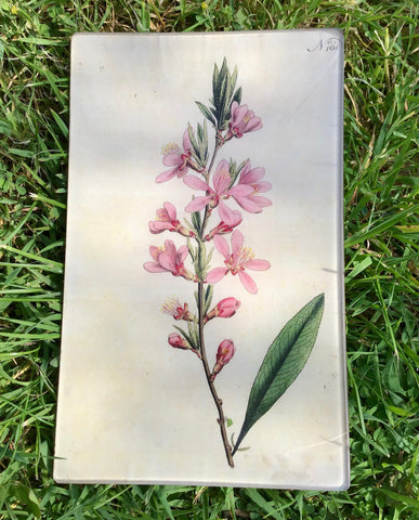 Vintage decoupage glass plate - Pink Blossom
