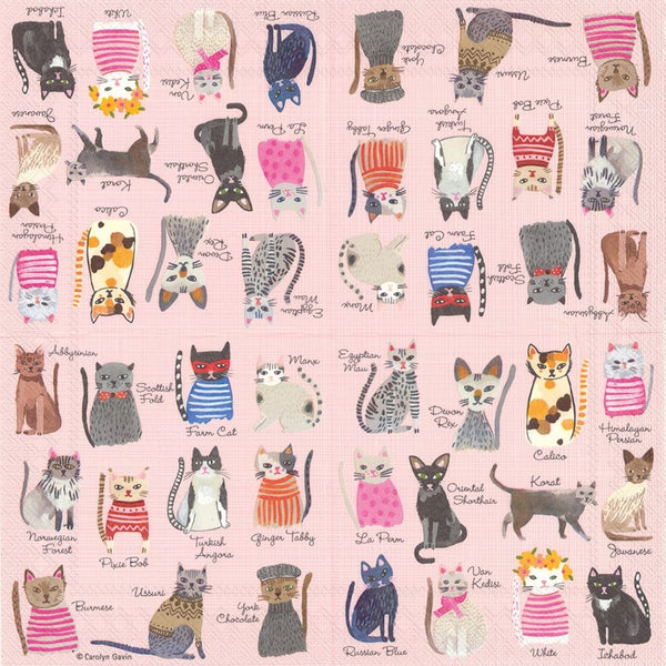 Cool Cats Paper Napkins - Lunch