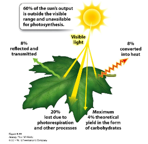 Sunlight and photosynthesis