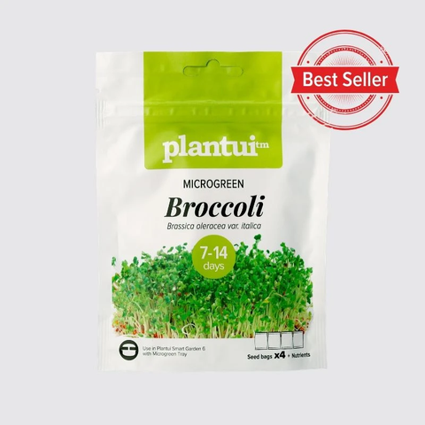 Microgreen Broccoli - Preorder