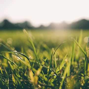 Caring For Your Lawn In Extreme Heat