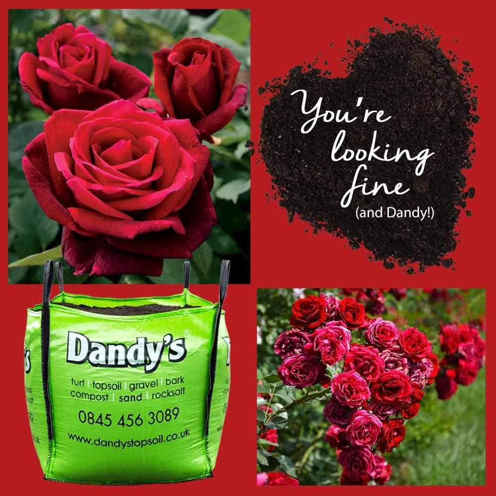 Grow Your Own - Roses... *Valentine's edition!*