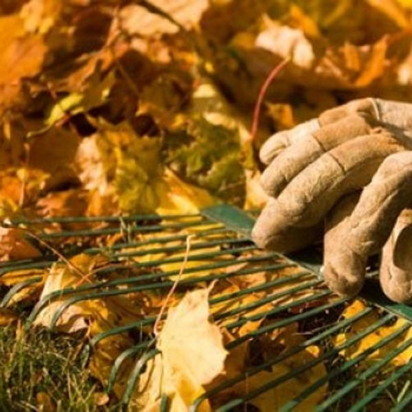 Late Autumn Gardening Tips...