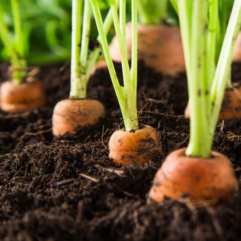 Lawn & Garden Month - The Vegetable Guide