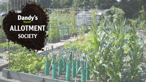 Dandy's Allotment Society