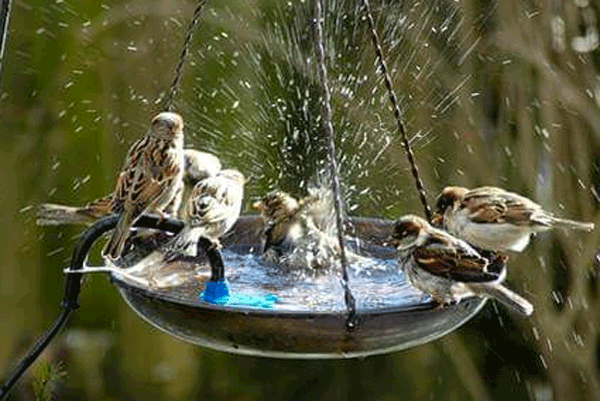 Dandy's Bird Bath
