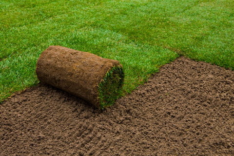 Lawn turf with Dandy's Topsoil