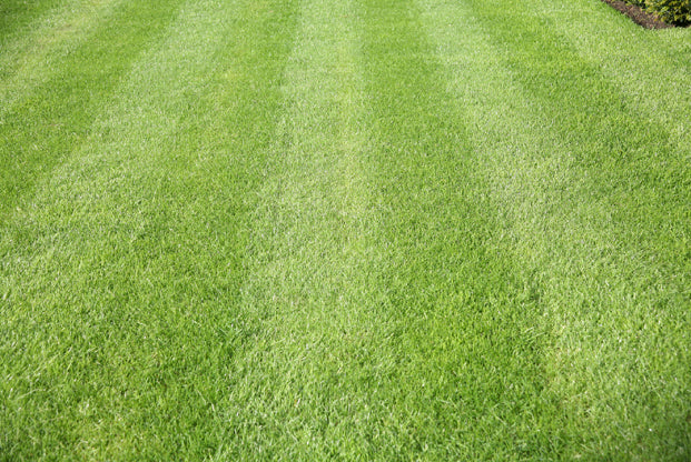How to guide: Topdressing your lawn– Dandy's Topsoil & Landscape