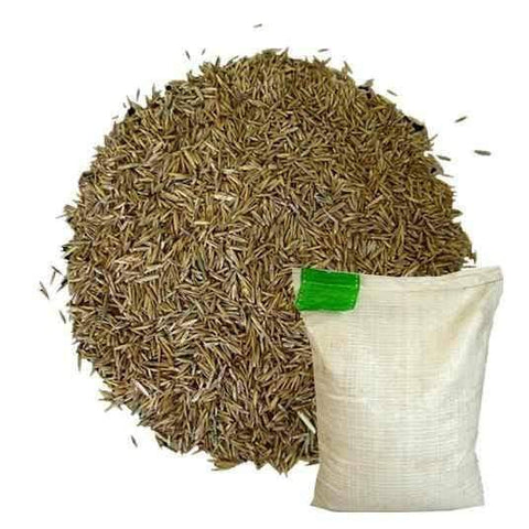 1kg Bag Hardwearing Grass Seed for only £9.99 | Dandys