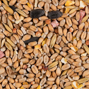 Wild Bird Seed Mix 2kg (Add to your bulk bag)