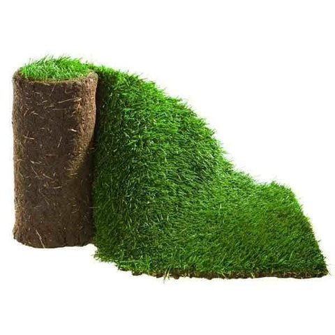 Image of Click & Collect Lawn Turf m2 rolls - SPECIAL OFFER, COLLECTION ONLY!! | Dandys