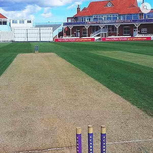 Cricket Squares Grass Seed | Dandys
