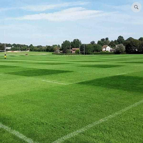 Football/Rugby ECO Ryegrass Grass Seed | Dandys