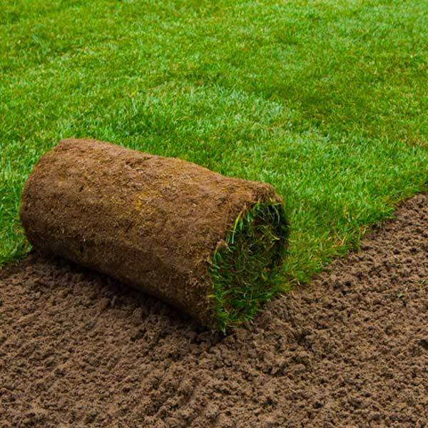 Buy Dandy S Garden Lawn Turf Online Fast Home Delivery Dandy S Topsoil Landscape Supplies