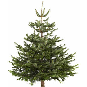 Sustainable Delamere Forest Christmas Tree | Dandys