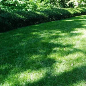 Shade Grass Seed Mix | Dandys