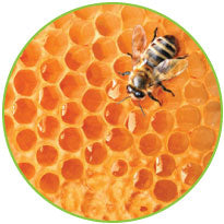 Holistic Bee Propolis