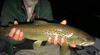 Fishing Report May 17th:  Special Catskill Report