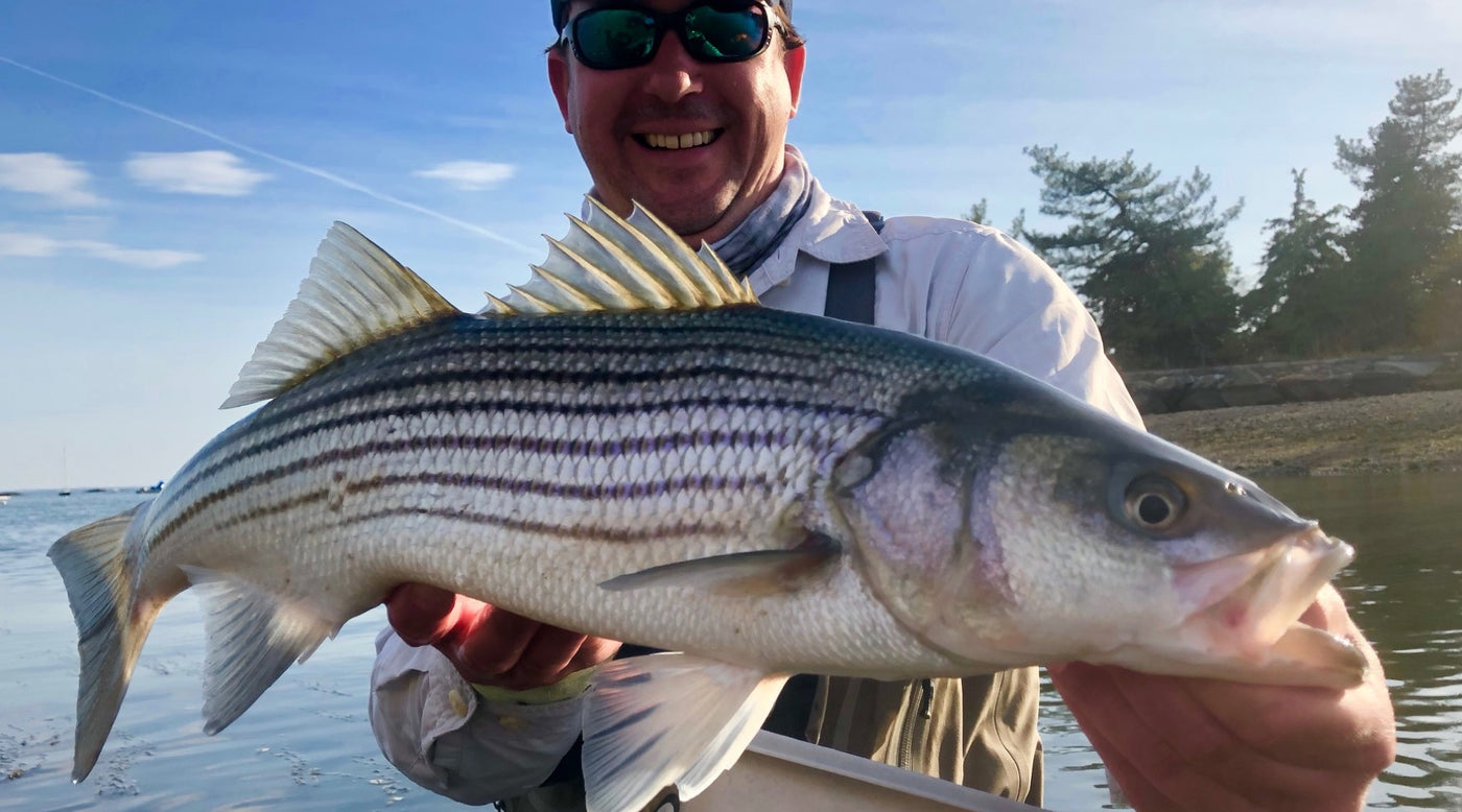 Beginners Guide to Striped Bass Gear - The Compleat Angler