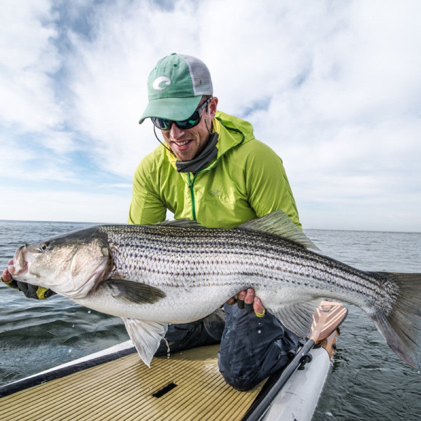 Striped Bass Eastern Long Island Sound