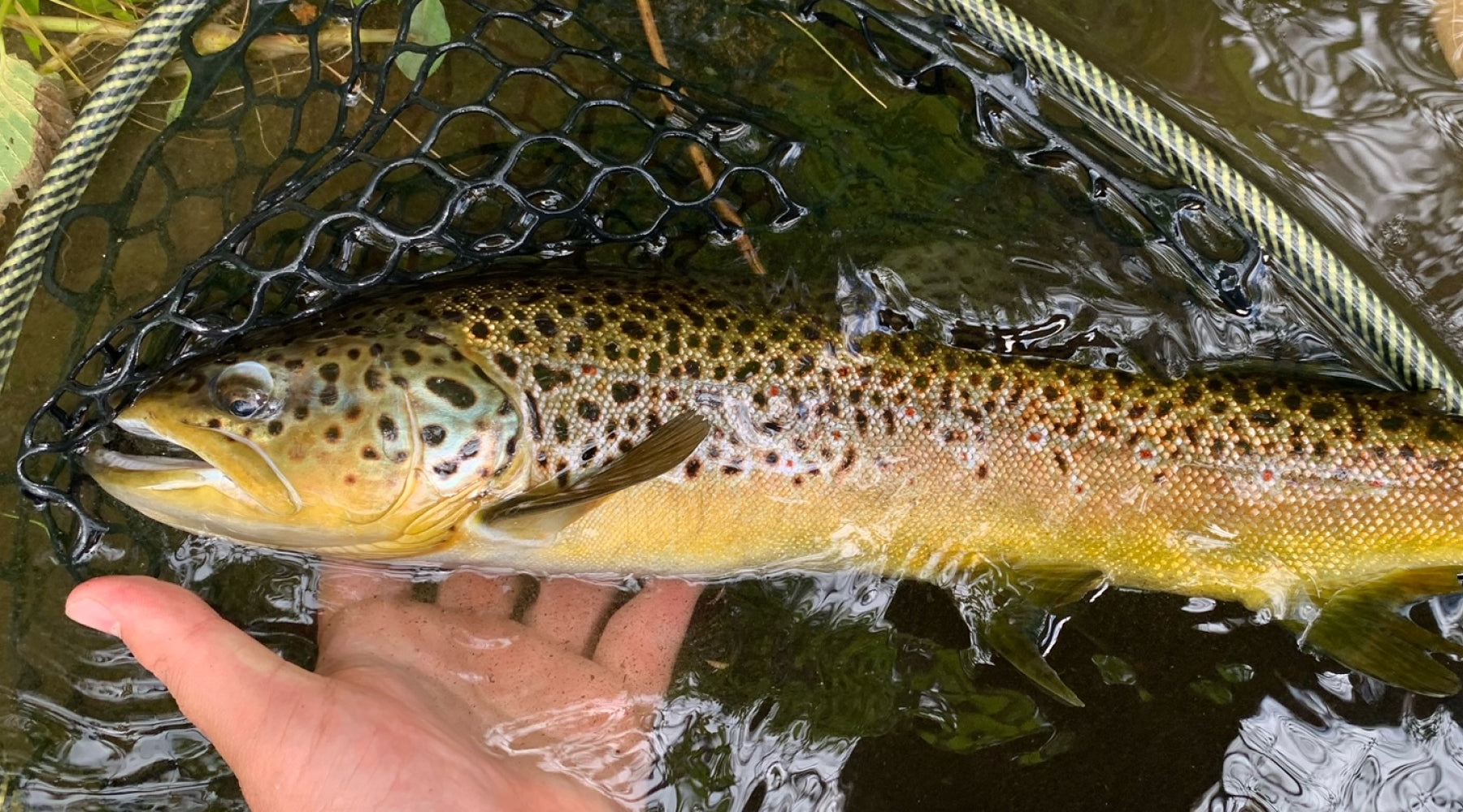 Fishing Report Brown Trout