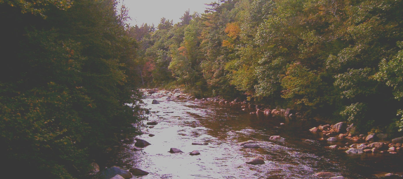 Saco River Fishing Report - The Compleat Angler