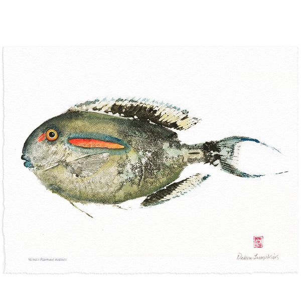 Fish print Giclee, surgeon fish, Naʻenaʻe, Debra Lumpkins
