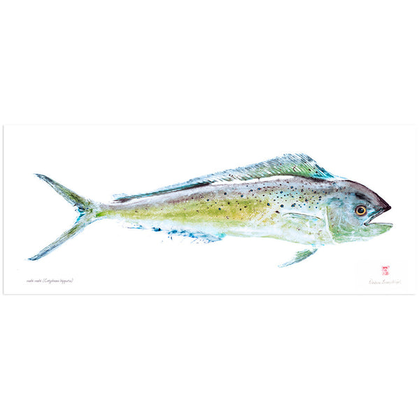 Mahimahi Giclee Fish Print - Hawaii Made