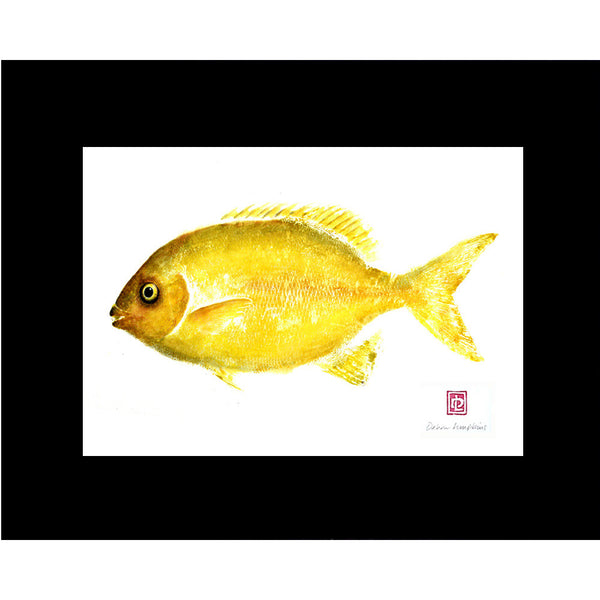 Maui made fish print of a chub fish also known as rudder or pilot fish
