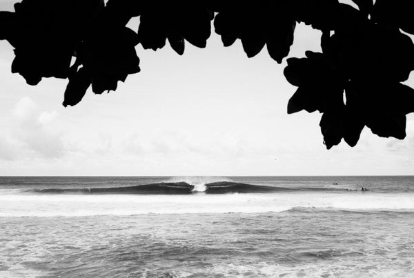 Peek Through Surf Print - Hawaii Made