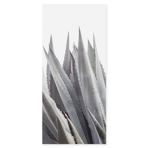 Agave Americana - Succulent Art Print by Cattie Coyle Photography