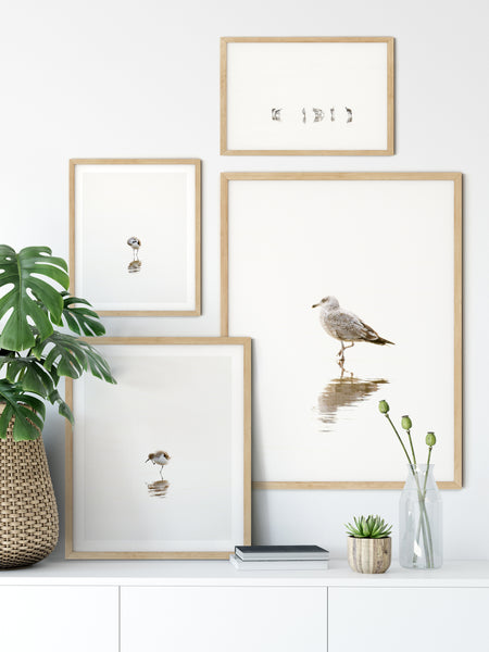 Birds gallery wall - 4 piece print set by Cattie Coyle Photography