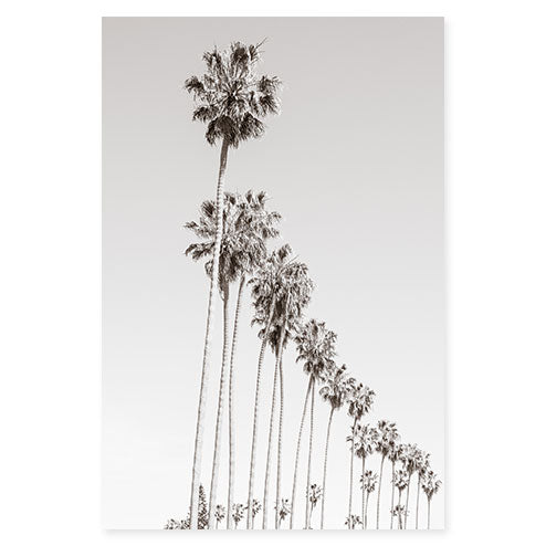 California Palm Trees - Black and white art print by Cattie Coyle Photography