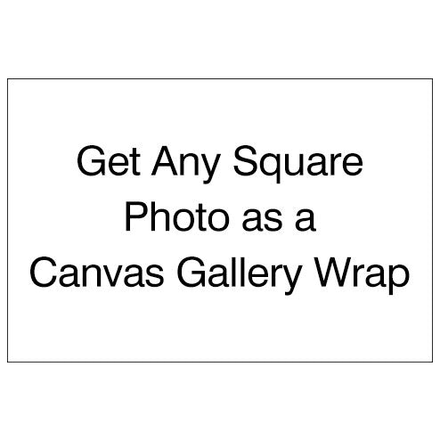 Canvas Prints - Square Images