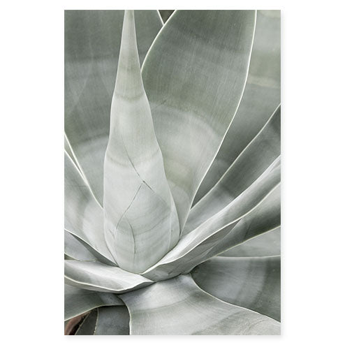 Fox Tail Agave - Succulent photography art print by Cattie Coyle Photography