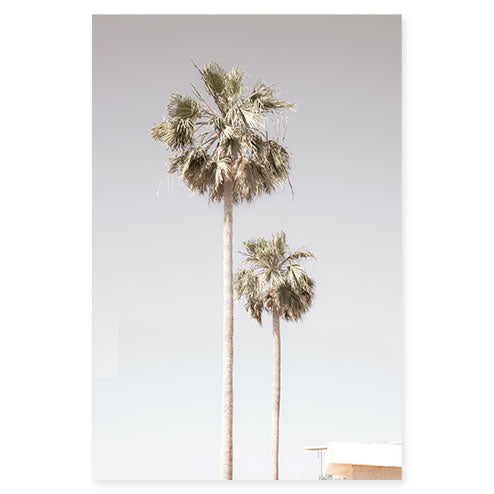 Palm Trees No 5 - Fine art print by Cattie Coyle Photography S